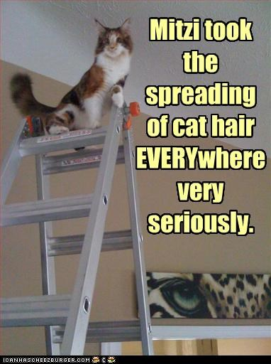 Mitzi took the spreading  of cat hair EVERYwhere very seriously.