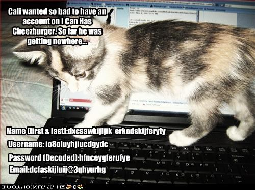 Cali wanted so bad to have an account on I Can Has Cheezburger. So far he was getting nowhere...