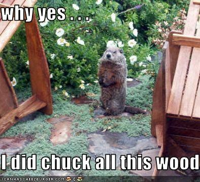 why yes . . .  I did chuck all this wood