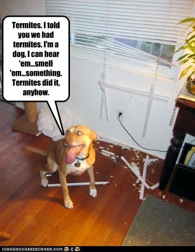 destruction,excuse,FAIL,pitbull,termites