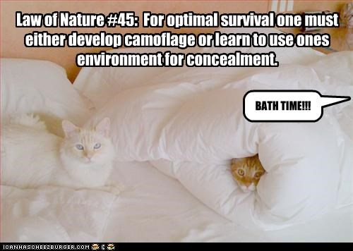 Law of Nature #45:  For optimal survival one must either develop camoflage or learn to use ones environment for concealment.