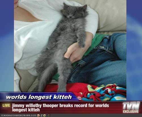worlds longest kitteh - jimmy willothy thooper breaks record for worlds longest kitteh