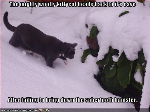 The mighty woolly kittycat heads back to it's cave   After failing to bring down the sabertooth hamster..