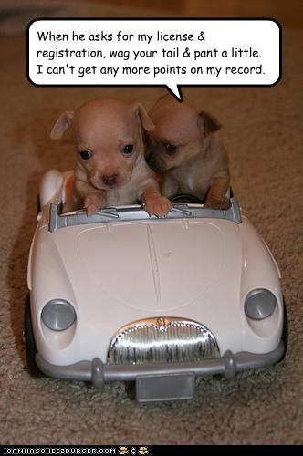 When he asks for my license & registration, wag your tail & pant a little.  I can't get any more points on my record.