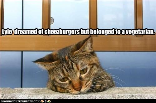 Lyle  dreamed of cheezburgers but belonged to a vegetarian.