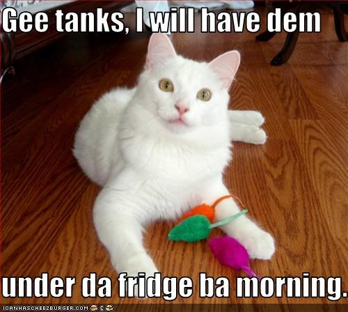 Gee tanks, I will have dem  under da fridge ba morning.