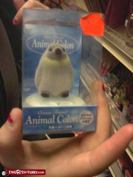 Animal Colon