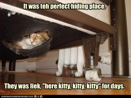 """It was teh perfect hiding place.           They was liek, """"here kitty, kitty, kitty"""" for days."""