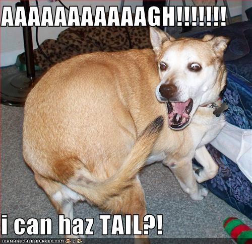AAAAAAAAAAAGH!!!!!!!  i can haz TAIL?!