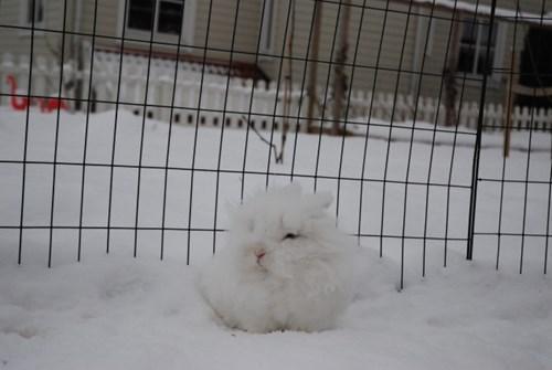 Bunday,bunnies,list,snow,squee,rabbits