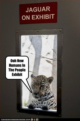 hoomans,lolleopards,zoo,zoos
