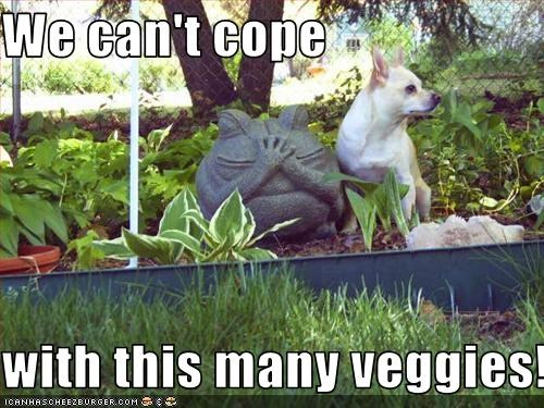 We can't cope  with this many veggies!