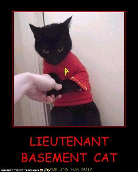 LIEUTENANT  BASEMENT  CAT