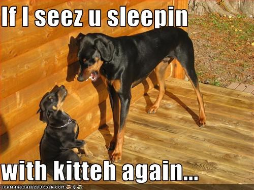 If I seez u sleepin  with kitteh again...