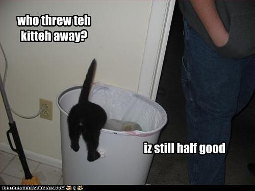 who threw teh kitteh away?