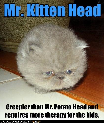 Mr. Kitten Head