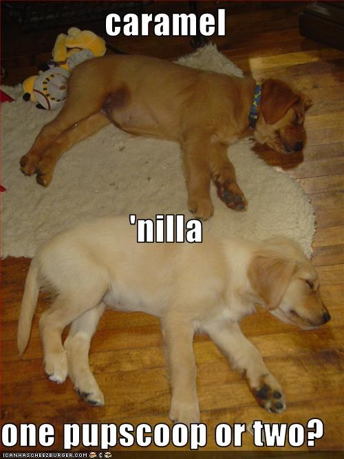 caramel 'nilla one pupscoop or two?