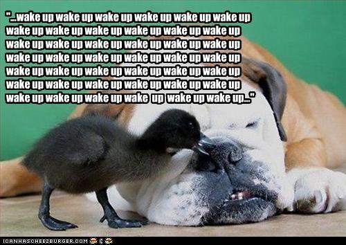"""...wake up wake up wake up wake up wake up wake up wake up wake up wake up wake up wake up wake up wake up wake up wake up wake up wake up wake up wake up wake up wake up wake up wake up wake up wake up wake up wake up wake up wake up wake up wake up wak"