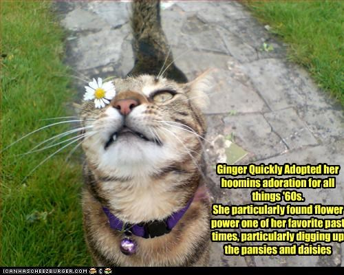 Ginger Quickly Adopted her hoomins adoration for all things '60s. She particularly found flower power one of her favorite past times, particularly digging up the pansies and daisies
