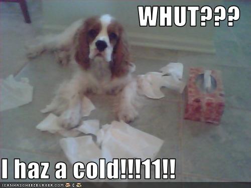 WHUT???  I haz a cold!!!11!!