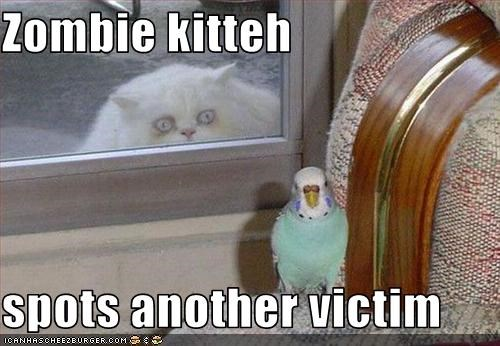Zombie kitteh  spots another victim