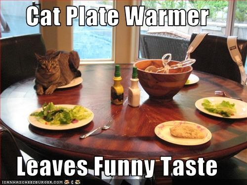 Cat Plate Warmer  Leaves Funny Taste