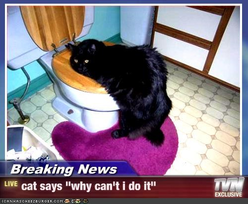 "Breaking News - cat says ""why can't i do it"""