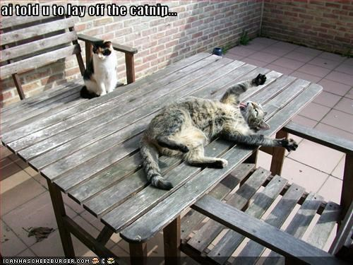 ai told u to lay off the catnip...