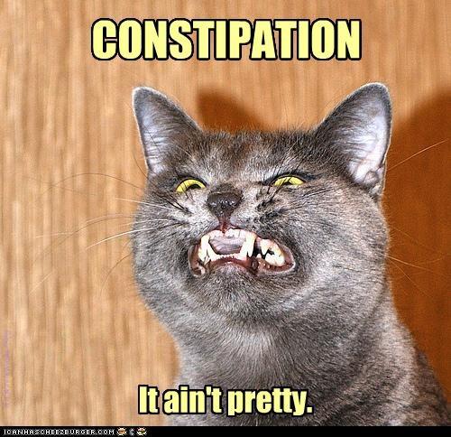 (s)cat humor