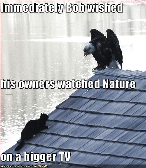 Immediately Bob wished his owners watched Nature on a bigger TV