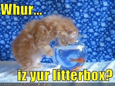 Whur...        iz yur litterbox?