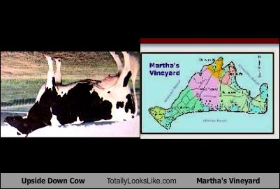 Upside Down Cow Totally Looks Like Martha's Vineyard