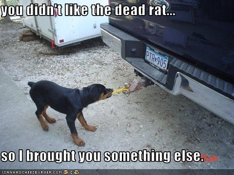 you didn't like the dead rat...  so I brought you something else.