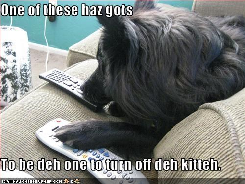 One of these haz gots  To be deh one to turn off deh kitteh.