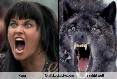 Xena Totally Looks Like a rabid wolf