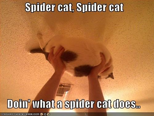 Spider cat, Spider cat  Doin' what a spider cat does..
