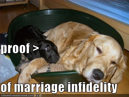 proof > of marriage infidelity