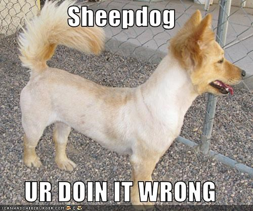 Sheepdog  UR DOIN IT WRONG