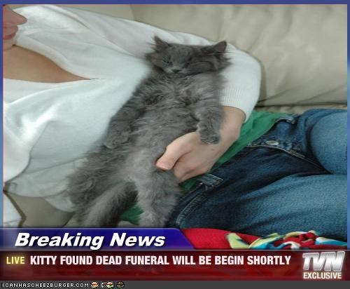 Breaking News - KITTY FOUND DEAD FUNERAL WILL BE BEGIN SHORTLY