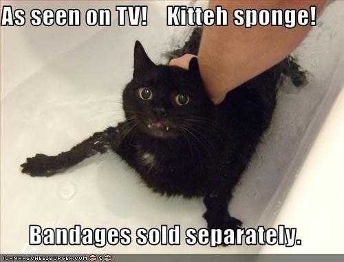 As seen on TV!    Kitteh sponge!  Bandages sold separately.