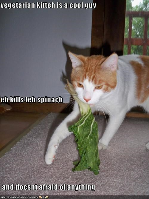vegetarian kitteh is a cool guy eh kills teh spinach  and doesnt afraid of anything