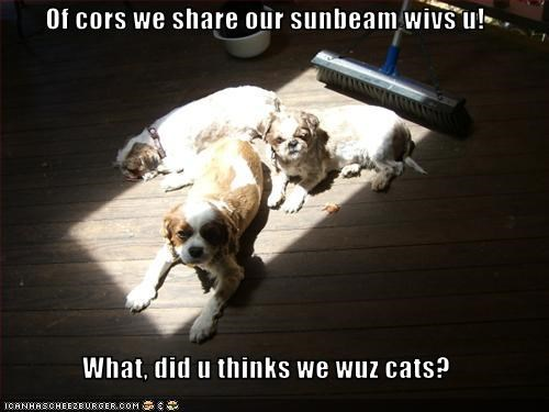 Of cors we share our sunbeam wivs u!  What, did u thinks we wuz cats?