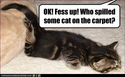 OK! Fess up! Who spilled some cat on the carpet?