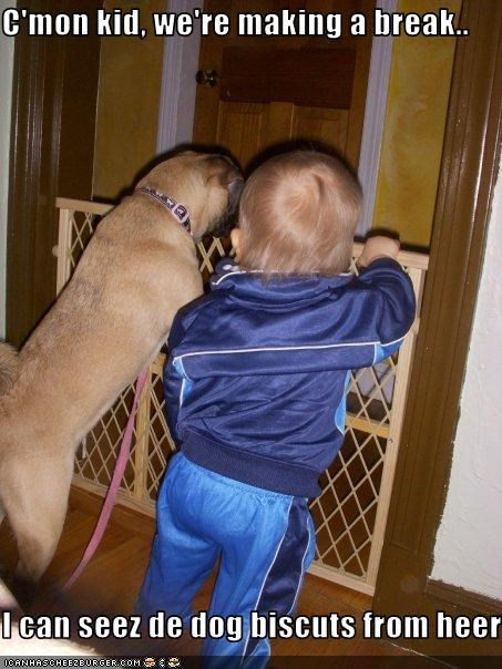 C'mon kid, we're making a break..  I can seez de dog biscuts from heer