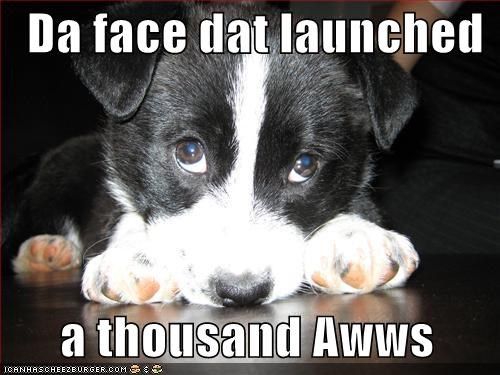 Da face dat launched      a thousand Awws