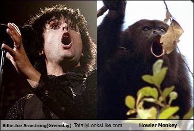 Billie Joe Armstrong(Greenday) Totally Looks Like Howler Monkey