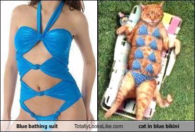 Blue bathing suit Totally Looks Like cat in blue bikini