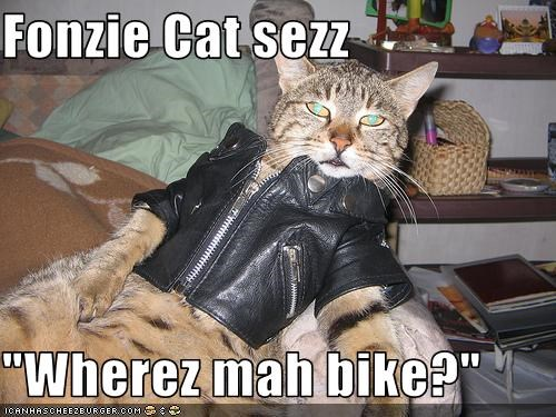 "Fonzie Cat sezz  ""Wherez mah bike?"""