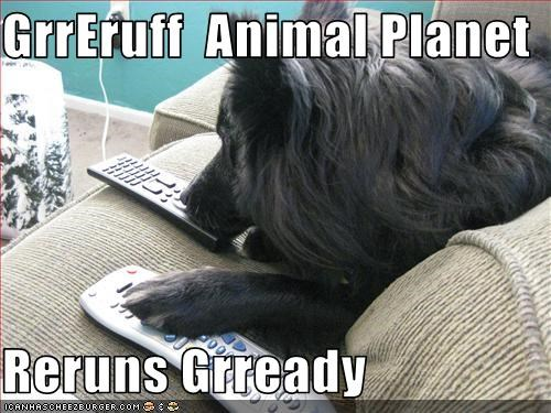 GrrEruff  Animal Planet   Reruns Grready