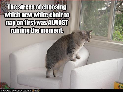 decisions,fur,nap,plotting
